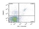 Staining Mouse Splenocytes With Anti-CD49b PE