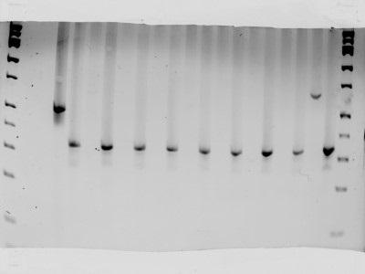 Choosing a SNP Genotyping Method | Biocompare: The Buyer's