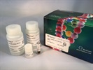 cfPure™ Cell Free DNA Extraction Kit