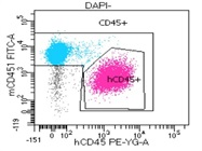 Anti Mouse CD45.1 Antibody For Flow Cytometry