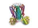 GPCR Proteins