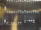 Cheap and Reliable PCR Reagents
