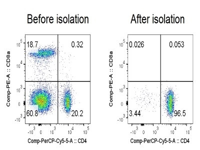 Isolation Of Mouse Cd4 T Cell Negative Selection