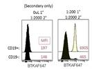 Btk Antibody