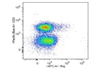 Antibody Stains Interferon gamma Producing T Cells Very Well
