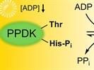 Detecting Phosphorylation