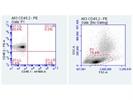 Excellent CD45.2 Antibody