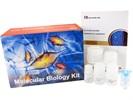 Plasmid DNA Miniprep Kits