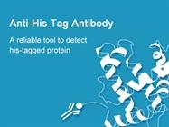 His Tag Antibody, Mouse Mab