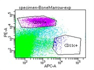 Decent Anti-CD317 Antibody, Works