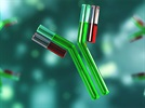 How to Choose between Monoclonal and Polyclonal Antibodies