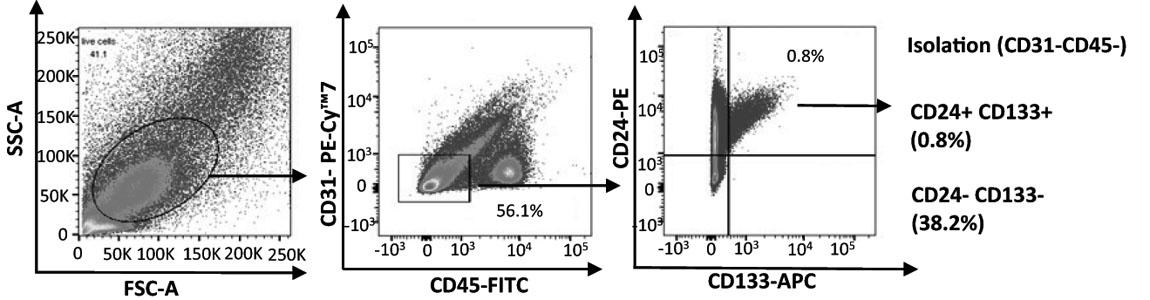 Human Antibody CD133-APC