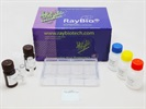 C-Series Human Cytokine Array 5