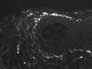 Good BioLegend CD73 Antibody