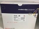 Large-Scale Plasmid Purification from GeneJET Plasmid Midiprep Kit