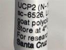 Good UCP2 Western Blot Antibody from Santa Cruz