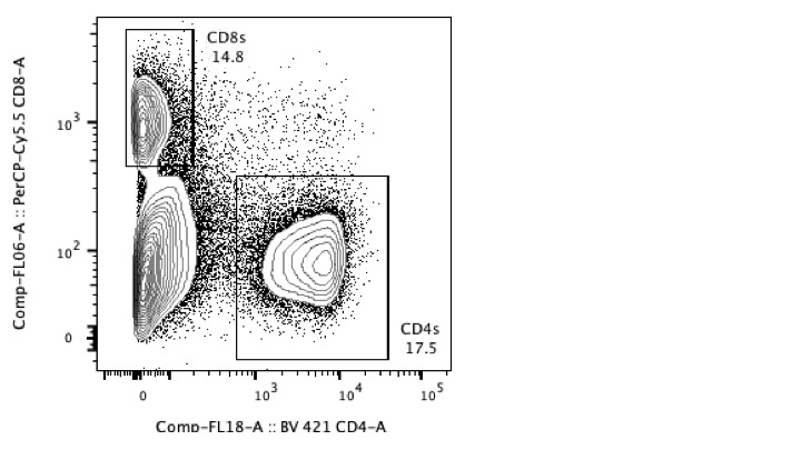 Detection of CD4 T Cells in Mouse Tissues
