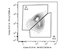 CXCR4 Antibody for Detection of Dark Zone B Cells