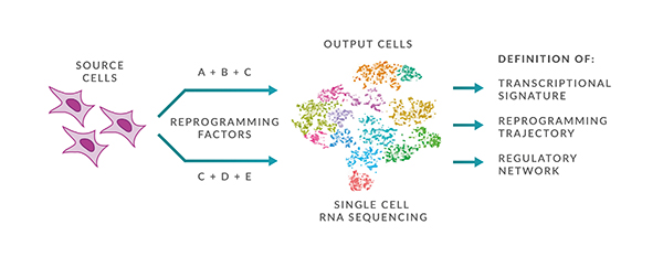 single cell genotyping