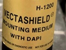 VECTASHIELD® Antifade Mounting Medium with DAPI Gives Great Results