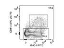 CD11c-APC-Vio770, Mouse
