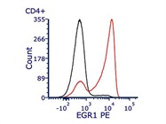 Detecting EGR1 Expression in CD4+ T Cells
