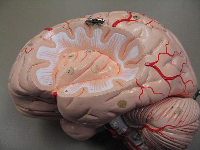 Researchers Map Self-Esteem in the Brain   Biocompare: The