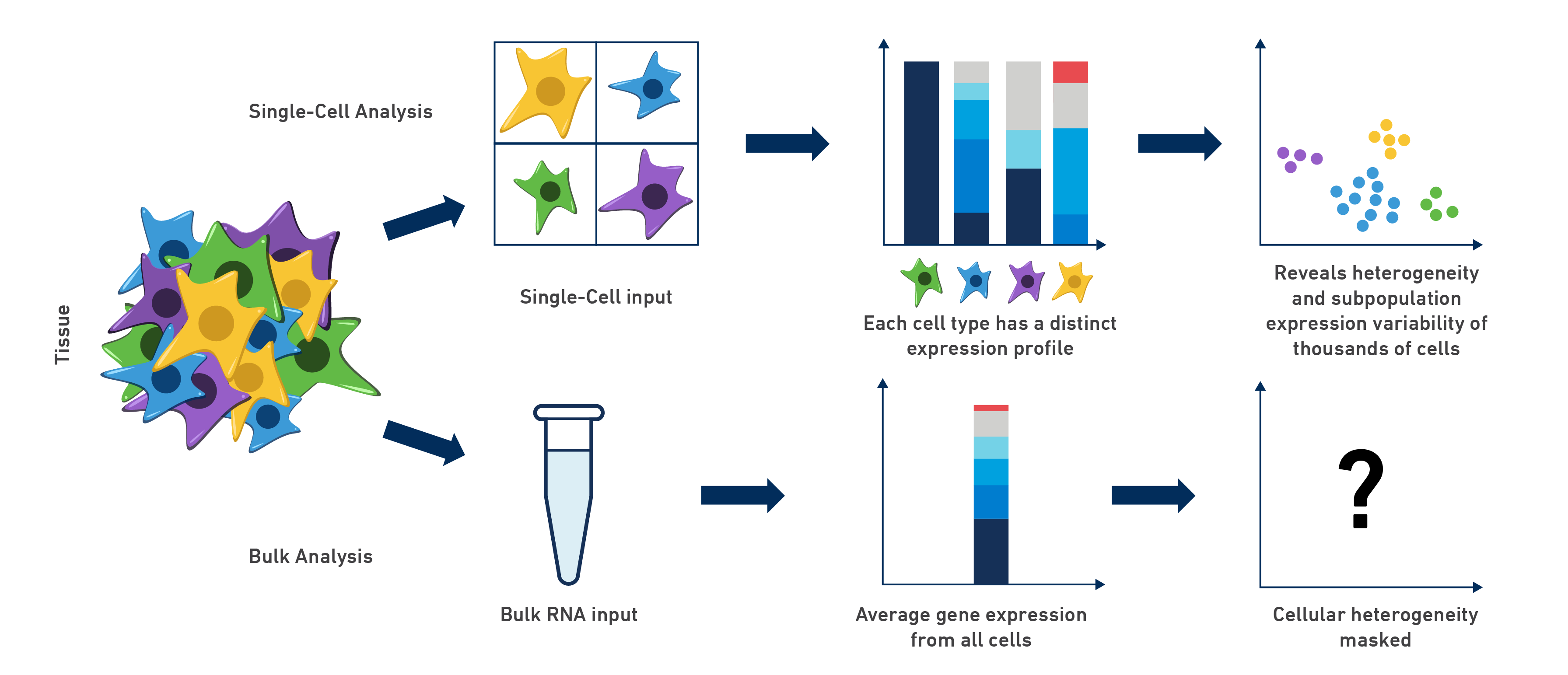 Single Cell Set Up Sample Preparation Tips Biocompare