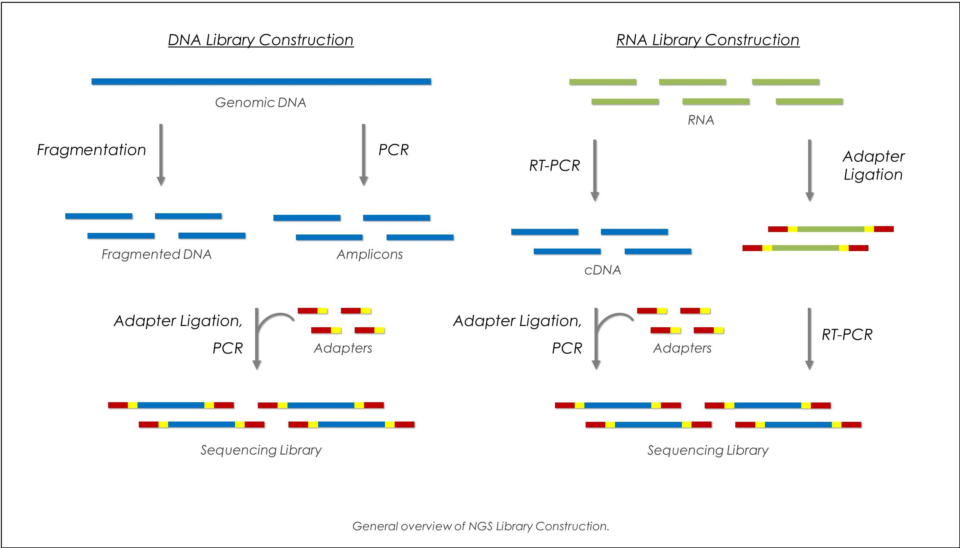 next generation dna sequencing technologies biology essay What is the difference between second and third generation sequencing same as next generation sequencing biology bioinformatics dna-sequencing or.