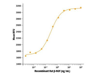 beta-NGF Protein