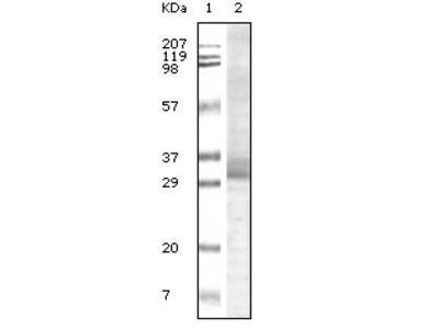 Trim5a Antibody [3B11H2]
