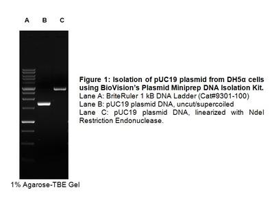 Plasmid Miniprep Kit