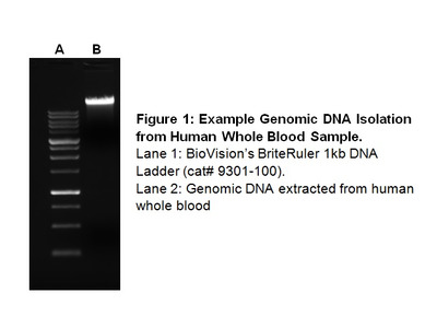 Whole Blood DNA Isolation Kit