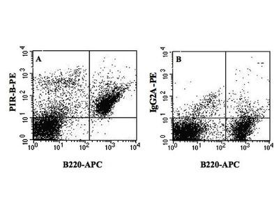 Paired Immunoglobulin-like Receptor B (PIR-B) (PE)