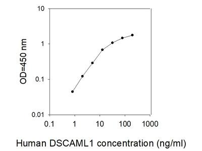 Human DSCAM-L1/DSCAM2 ELISA