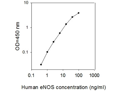 Human eNOS/NOS3 ELISA