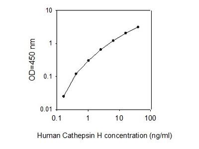Human Cathepsin H ELISA