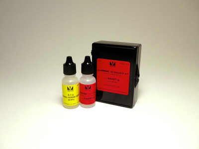 ImmPRESS™-AP Anti-Rabbit IgG Staining Kit, made in horse
