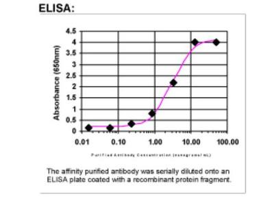 PPAR delta / NR1C2 Antibody