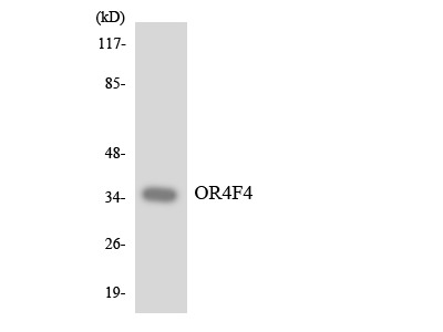 OR4F4 Polyclonal Antibody