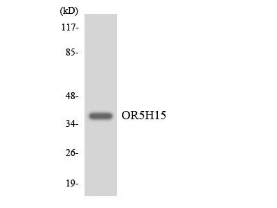 OR5H15 Polyclonal Antibody