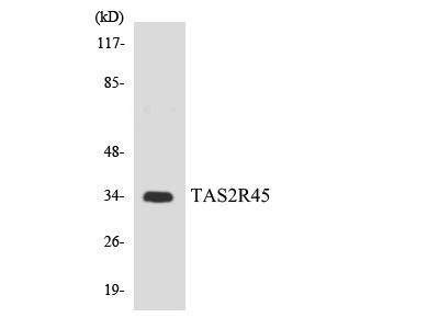 TAS2R45 Antibody