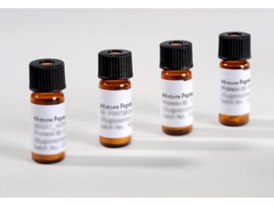 Histone Peptide H3 23:42 K36me2 (H3.1t)