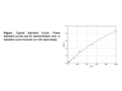 alpha-Synuclein (SNCA) (Human) ELISA Kit
