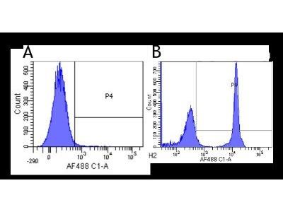 CD4 Antibody (13B8.2)