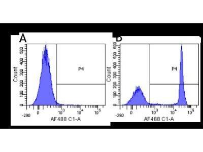CD4 Antibody (CE9.1 (Clenoliximab))