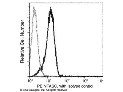 NFASC / Neurofascin Antibody (PE), Mouse MAb