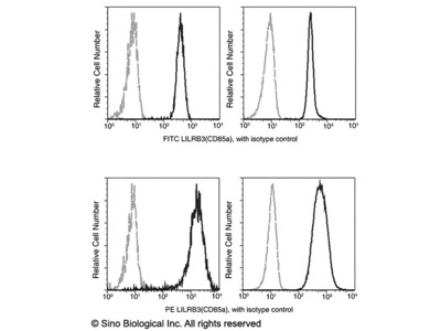 CD116 / GM-CSFR Antibody (FITC), Rabbit MAb