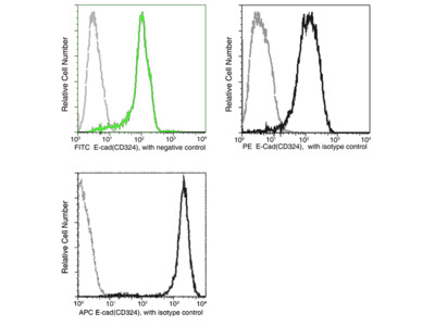 E-Cadherin / CDH1 / E-cad / CD324 Antibody (APC), Mouse MAb