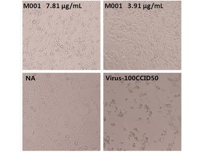 Enterovirus 71 VP4 Neutralizing Antibody